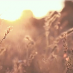 Video Boda servida por El Laurel en la finca Casa de Oficios